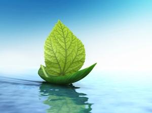 leaf-boat